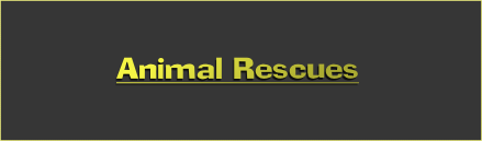 Animal Rescues Centres